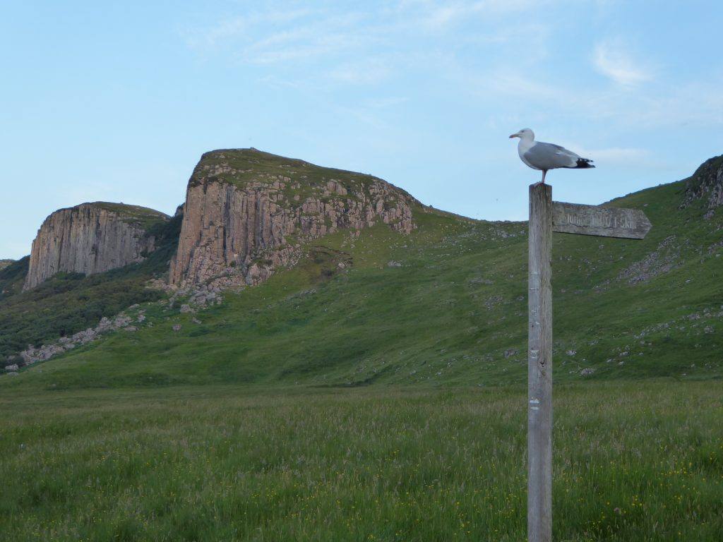 Seagull on a signpost on Skye.